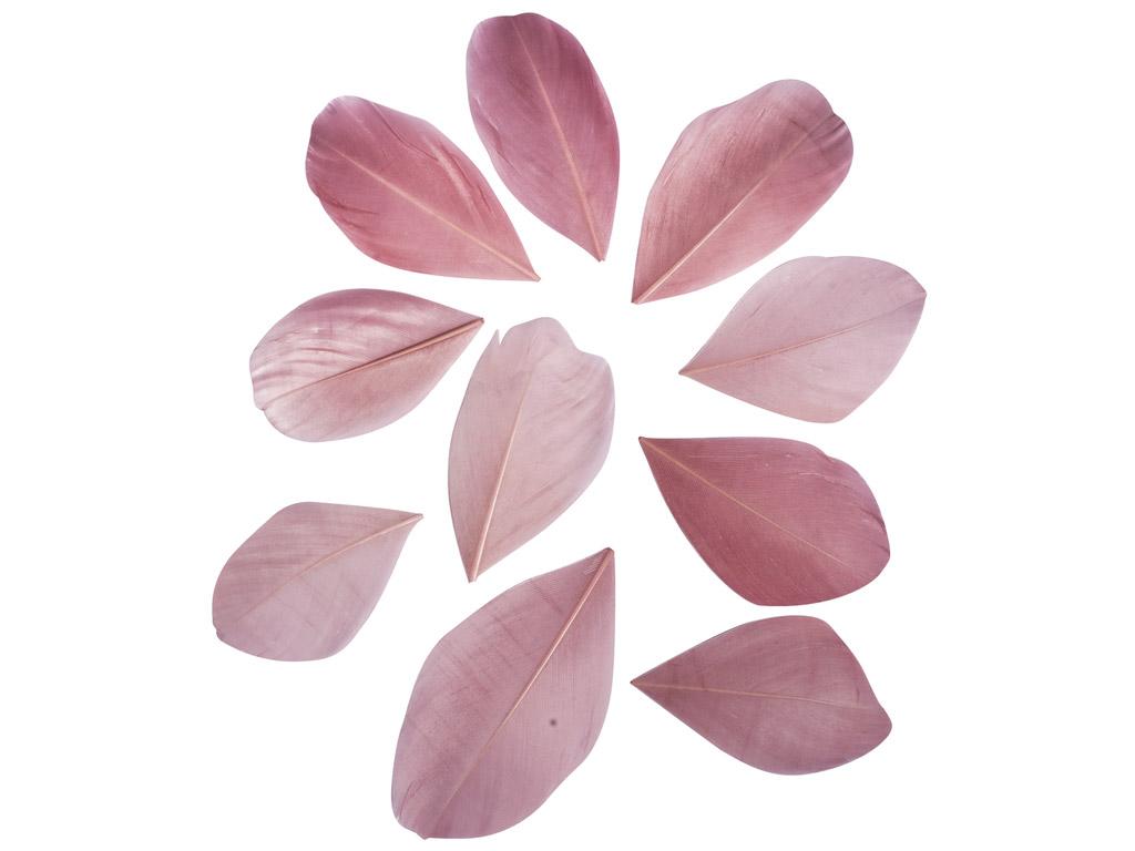 Dekoratiivsuled Rayher lõigatud 5-6cm 36tk roosa